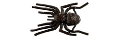 Gan Craft Big Spider