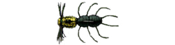 Imakatsu Fujin Spider