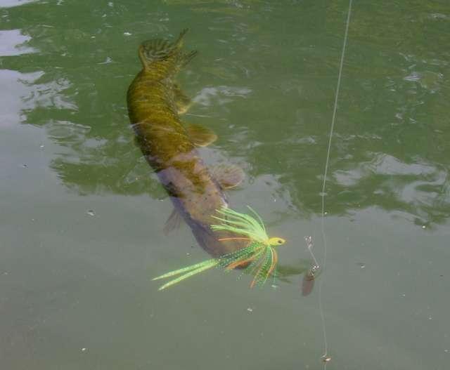 Acheter le choc le leader pour la pêche