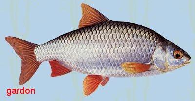La pêche du bateau linterdiction 2017
