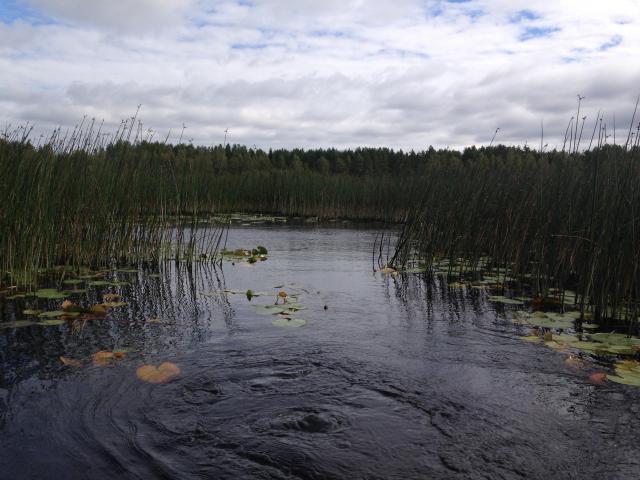 Retour d'un mois en Suède... Août 2016 6595-1474059309