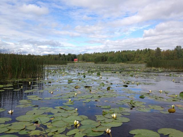 Retour d'un mois en Suède... Août 2016 6595-1474059405